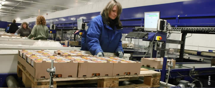 Food conveyors systems can prevent repetitive stress injuries in logistics warehouses
